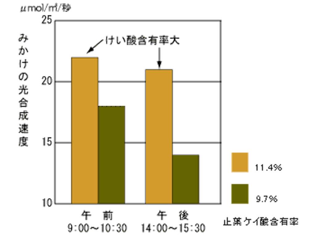 みかけの光合成速度の推移(山形農試 藤井)